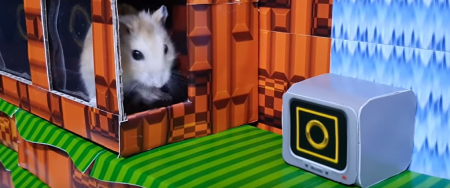 Check Out These INCREDIBLE Sonic-Themed Hamster Mazes!